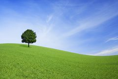 Green field and lonely tree Royalty Free Stock Image