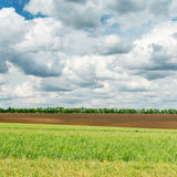 Green field and low clouds over it Royalty Free Stock Image