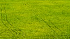 Green field lush. The lush green field looks bright Royalty Free Stock Image