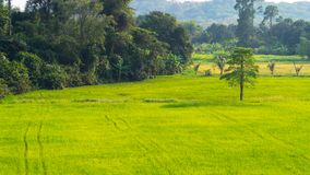 Green field lush. The lush green field looks bright Stock Photography