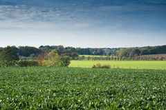 Green field in Margraten. Limburg, Holland stock photography