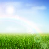 Green field. Field or meadow with green grass and rainbow vector illustration Royalty Free Stock Photography