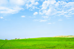 Green field meadow. Under blue cloudy sky royalty free stock photos