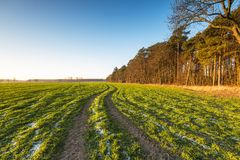 Green field in morning light Royalty Free Stock Photo