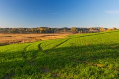 Green field in morning light Royalty Free Stock Image