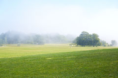 Green field with morning mist Stock Image