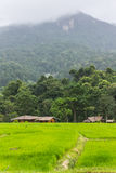 Green Field And Mountain in Doi inthanon, Maeglangluang Royalty Free Stock Photo