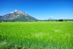Green field and the mountain at Salzburg. Green field, Blue sky and Mountain along the road in Salburg, Austria Royalty Free Stock Images