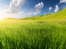 Green field. In the mountain valley. Beautiful summer landscape Royalty Free Stock Images