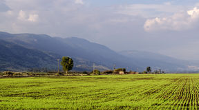 Green Field with mountains background Royalty Free Stock Photography
