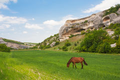 Green field, mountains and horses Stock Images