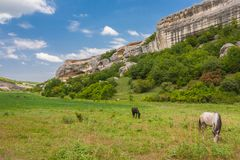 Green field, mountains and horses Royalty Free Stock Images