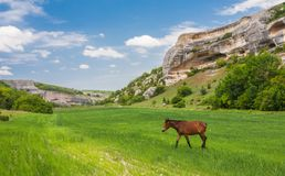 Green field, mountains and horses Royalty Free Stock Photography