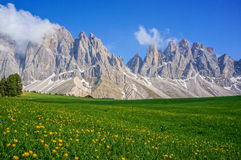 Green field and mountains. Green field. yellow flowers and mountains royalty free stock photo