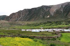Green field with mustard flower beside mountain, Tibet Royalty Free Stock Photos