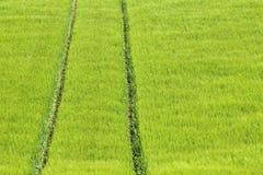 Green Field, nature abstarct. Stock Photos