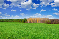 Green field near the forest on  background of blue sky Royalty Free Stock Photos