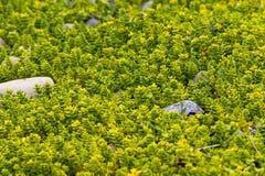 Green field near the ocean royalty free stock image