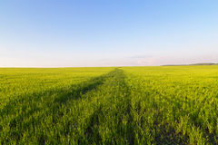 Green field for new crops. Stock Photography