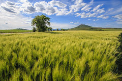 The green field. At nice sunny day with light clouds stock photography