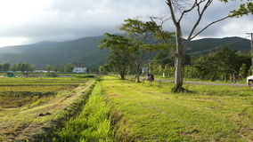 The green field. In the northern of Thailand Royalty Free Stock Photo