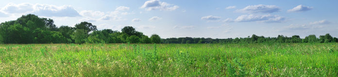 Green field panorama Royalty Free Stock Photos