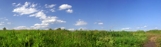 Green field panorama Royalty Free Stock Photo
