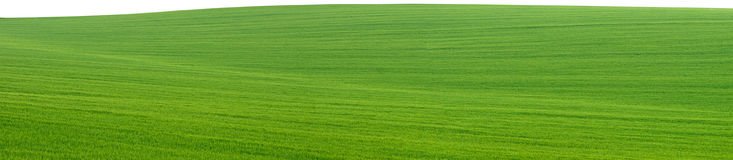 Green field panorama cutout Stock Photography