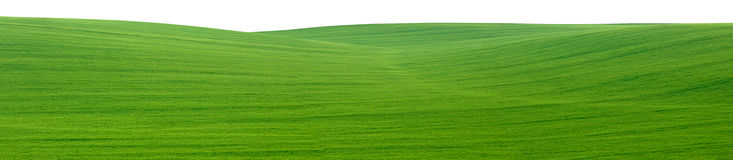 Green field panorama cutout Royalty Free Stock Photography