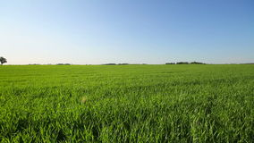 Green field panorama stock footage