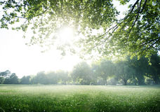 Green Field Park Environment Scenic Concept Royalty Free Stock Photo