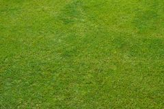 Green grass lawn, natural background stock photos