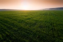 Green field with perfect grass Stock Images