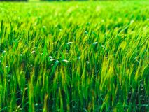 Green Field Photo Royalty Free Stock Photo