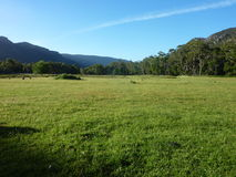 Green field. Photo of a lush green field at the foot of the Grampians in Victoria, Australia, and trees generic to the area Royalty Free Stock Photography