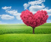 Green field and pink tree in shape of heart. Summer green field and pink tree in shape of heart Royalty Free Stock Photos