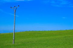 Green field and power line pole. Electric pole in green farm field Royalty Free Stock Photography