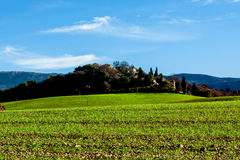 Green field in Provence, France. Shot in a quiet morning Stock Images