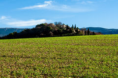 Green field in Provence, France. Shot in a quiet morning Stock Photography