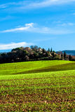 Green field in Provence, France. Shot in a quiet morning Stock Photo