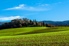 Green field in Provence, France. Shot in a quiet morning Royalty Free Stock Images