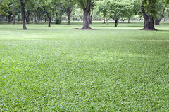 green field in public park Stock Image