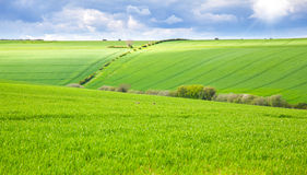 Green field with rabbits. Running wild Royalty Free Stock Photo