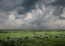 The green field in the rain Royalty Free Stock Photo