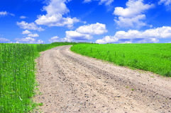Green field with road and blue sky. Picture of green field and sky in summer Royalty Free Stock Photo