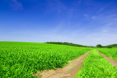 Green field with road and blue sky. Picture of green field and sky in summer Stock Photo