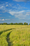 Green field with road and blue sky Stock Photos