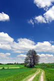 Green field, road, blue sky and white clouds Royalty Free Stock Photos