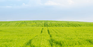 Green field, road Stock Images