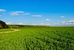 Green field,road,forest,on the background of the blue sky with clouds Stock Photos